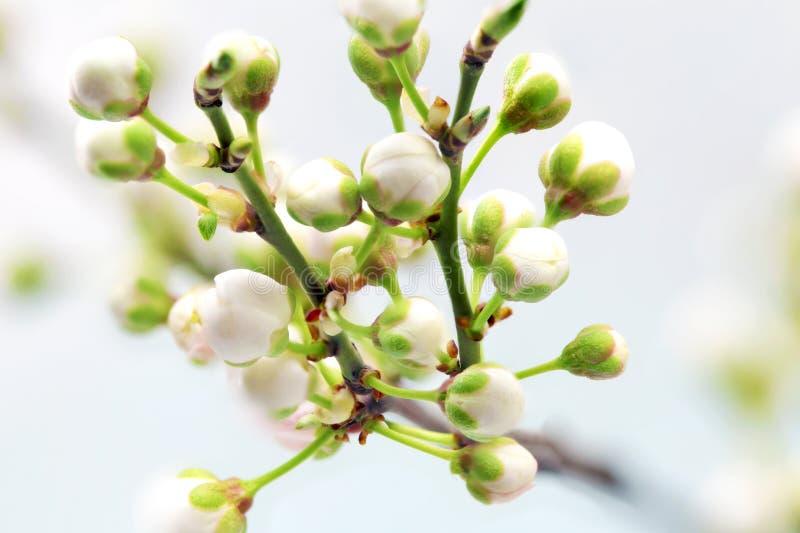 Filial med blomningar. arkivbilder