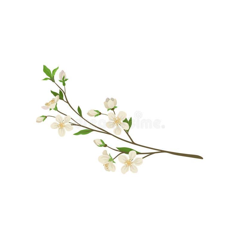 Filial med små nya blommor och gröna sidor Fatta av äppleträd Trees som växer från laken, bevattnar Detaljerad plan vektorsymbol vektor illustrationer