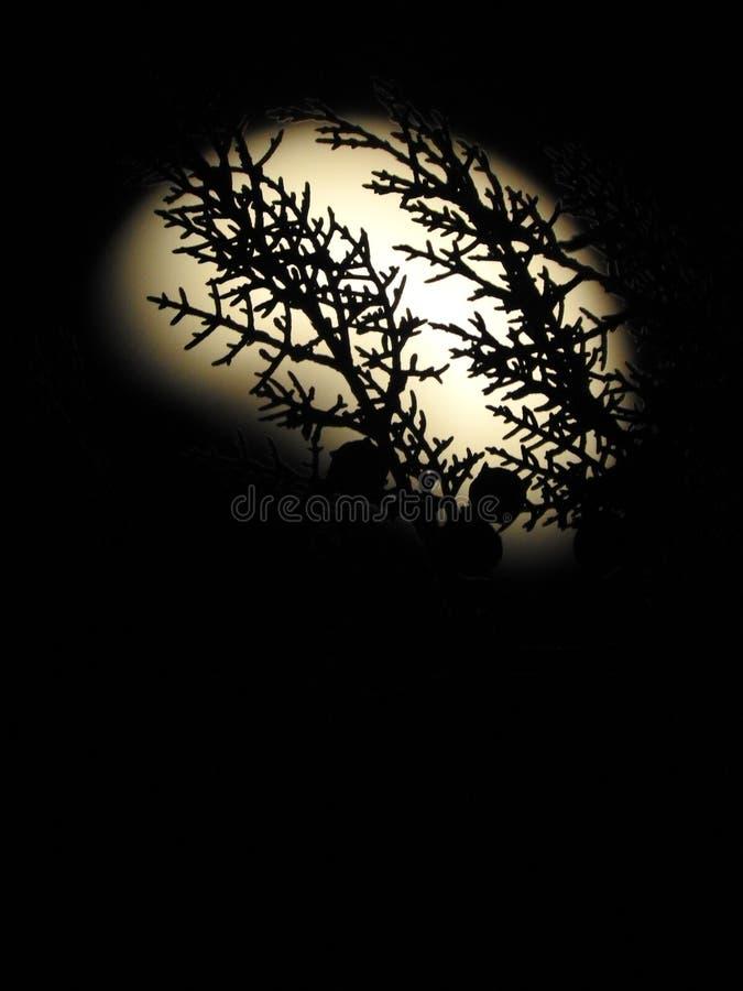 Filial och svart mörk bakgrund för måne royaltyfria foton