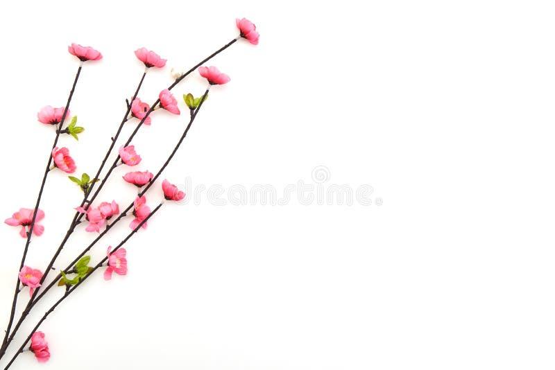 Filial rosa Cherry Blossoms arkivfoto