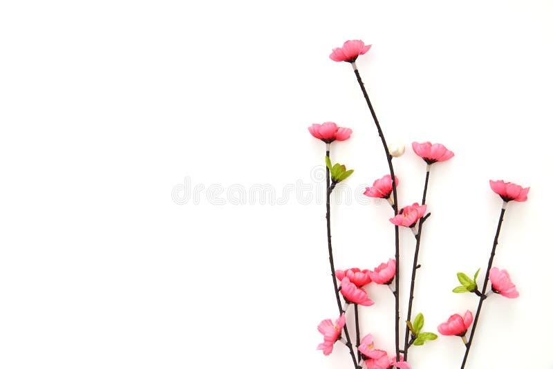 Filial rosa Cherry Blossoms arkivbild
