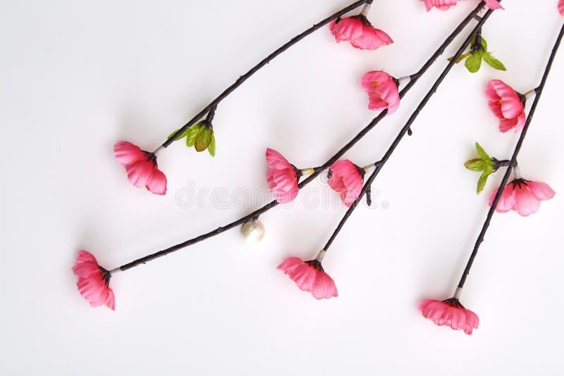 Filial rosa Cherry Blossoms royaltyfri bild