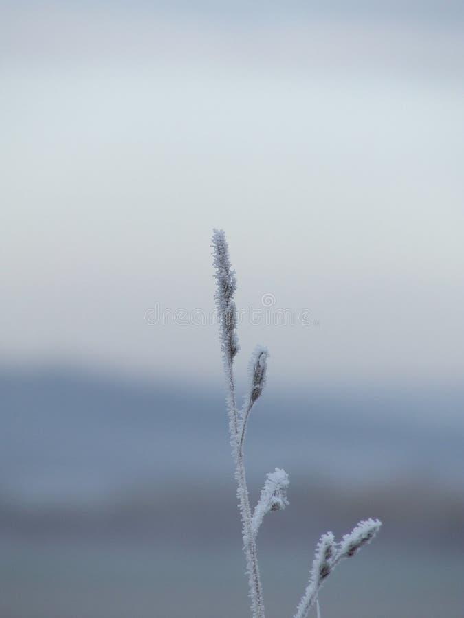 Filiale congelata fotografie stock libere da diritti