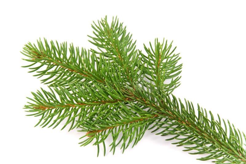 Download Filiale di albero immagine stock. Immagine di decorazione - 7308615