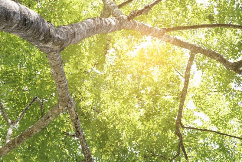 Filiale di albero con i fogli verdi fotografie stock libere da diritti