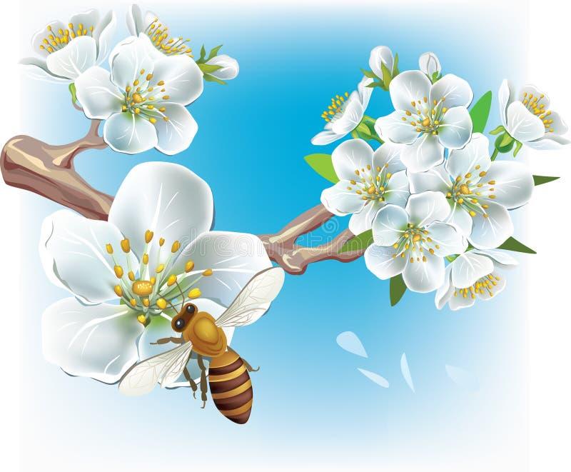 Filiale di fioritura e un ape illustrazione di stock