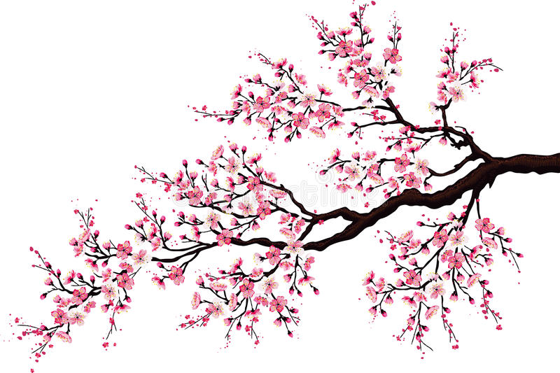 Filiale di una ciliegia sbocciante illustrazione di stock