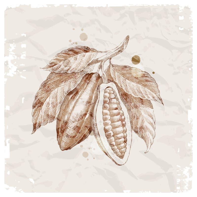 Filiale disegnata a mano con le fave di cacao illustrazione di stock