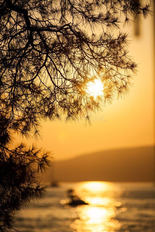 Filiale e tramonto di pino fotografia stock libera da diritti