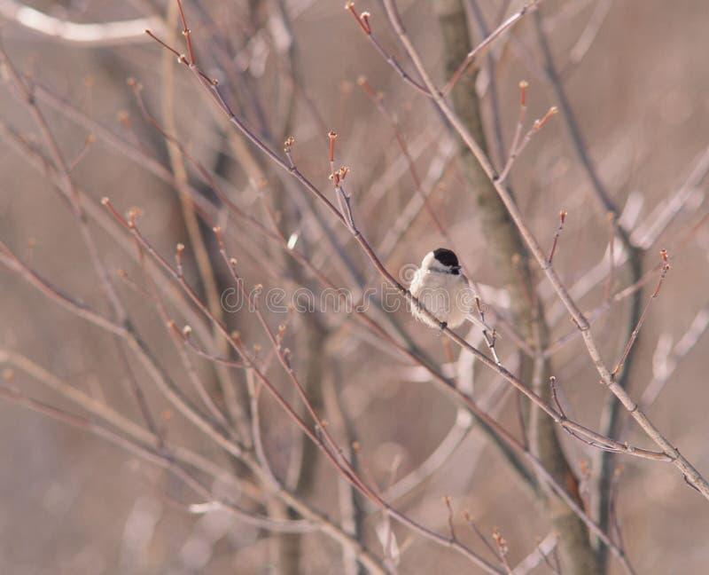 Filiale ed uccello fotografie stock