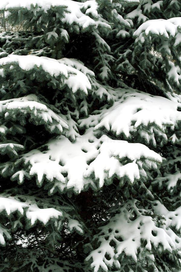 Filiale Snowbound fotografia stock libera da diritti