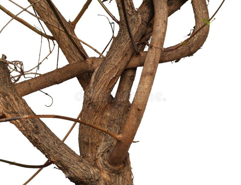 Filiale Twisty fotografie stock libere da diritti
