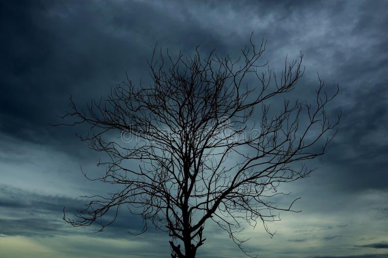 Filialen av dör trädet royaltyfria foton