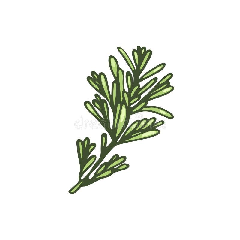 Filialen av rosmarin Kryddigt gräs för att äta royaltyfri illustrationer