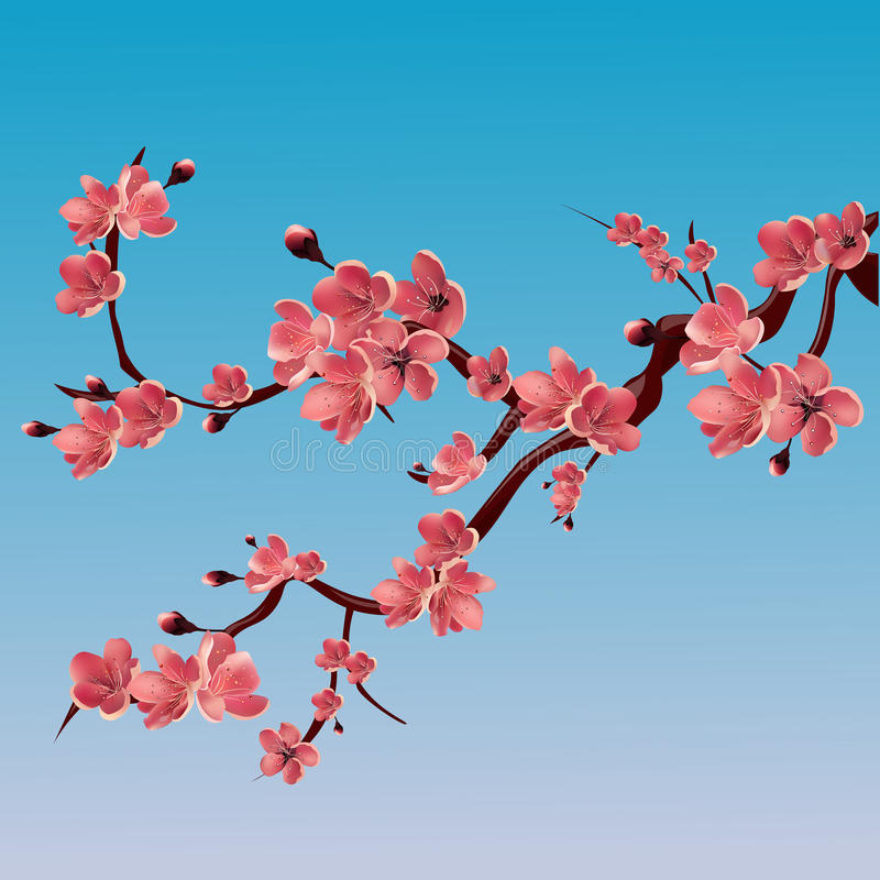 Filialen av steg blomstra sakura japansk sakura för Cherry tree Vektor isolerad illustration royaltyfri illustrationer