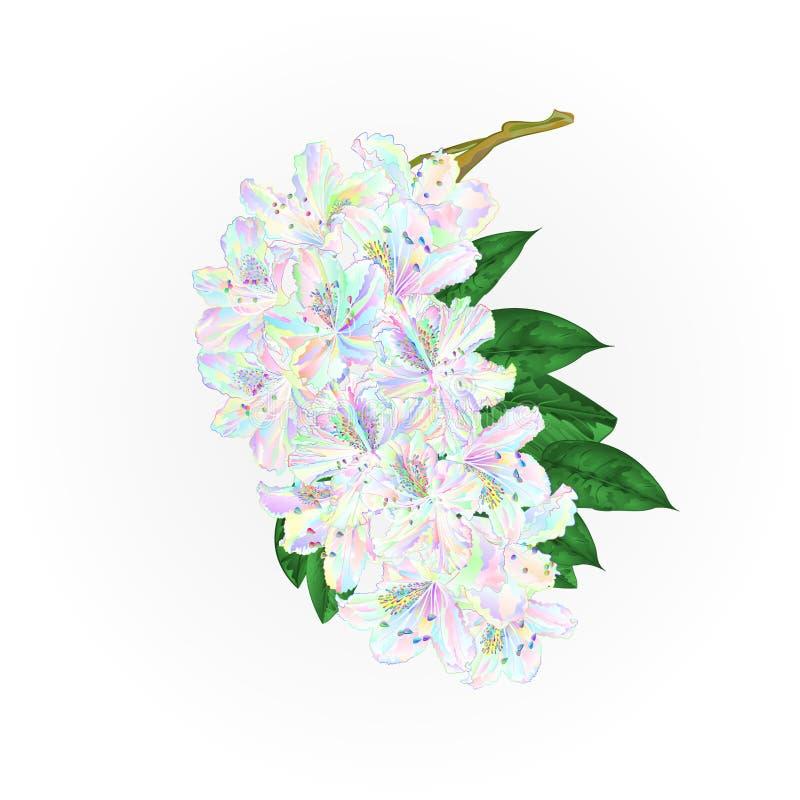 Filialen färgade blommarhododendron och lämnar vektorn för attraktion för handen för bergbusketappning vektor illustrationer