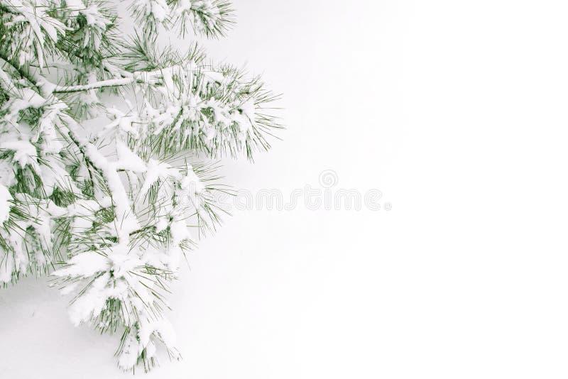 filialen räknade snow arkivbilder