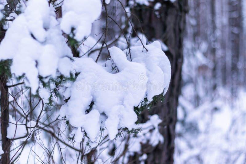 filialen räknade tunt för snow för isexponeringslager slappt royaltyfria foton