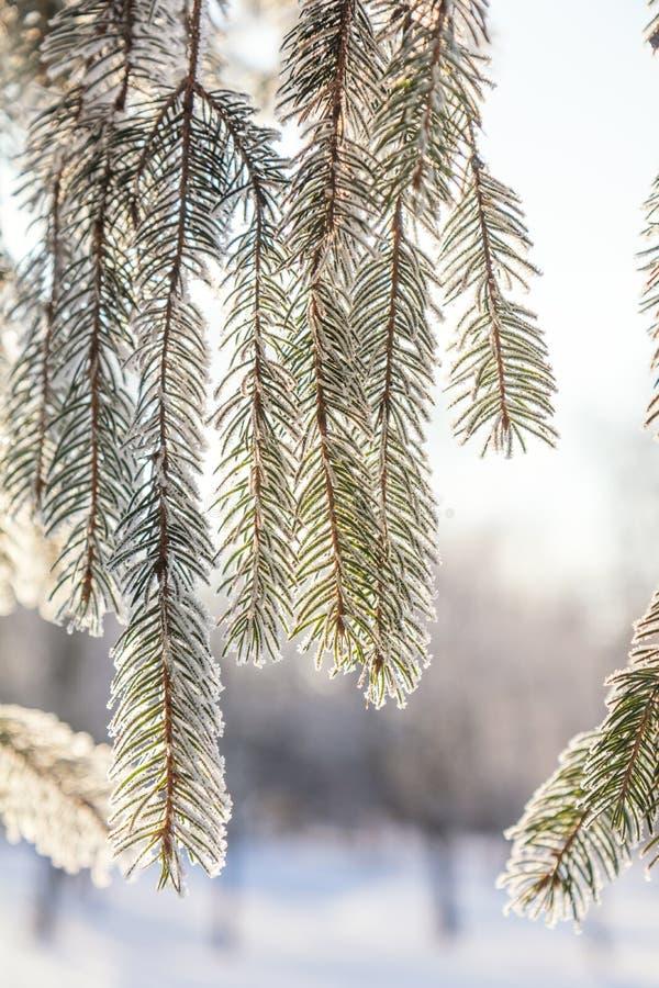 Filialen sörjer trädet i snö arkivbild