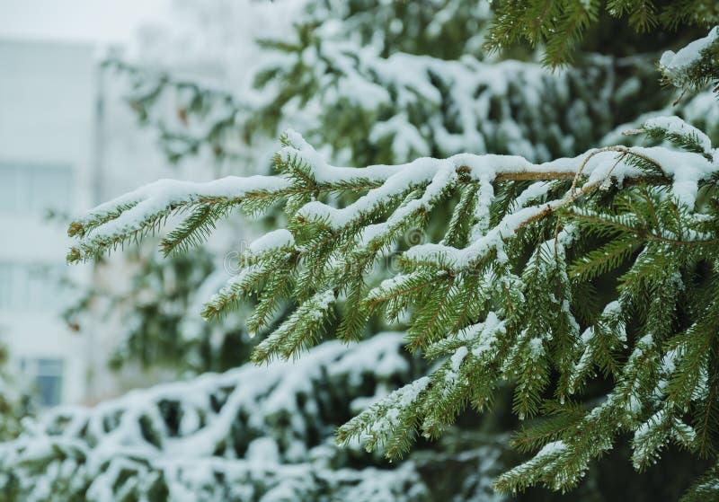 Filialen täckas med snö fotografering för bildbyråer