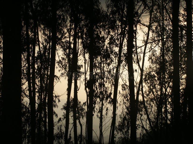 Download Filialer fotografering för bildbyråer. Bild av lampa, land - 244875