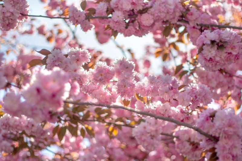 Filialer av att blomstra blommor, glad vårbakgrund royaltyfria bilder