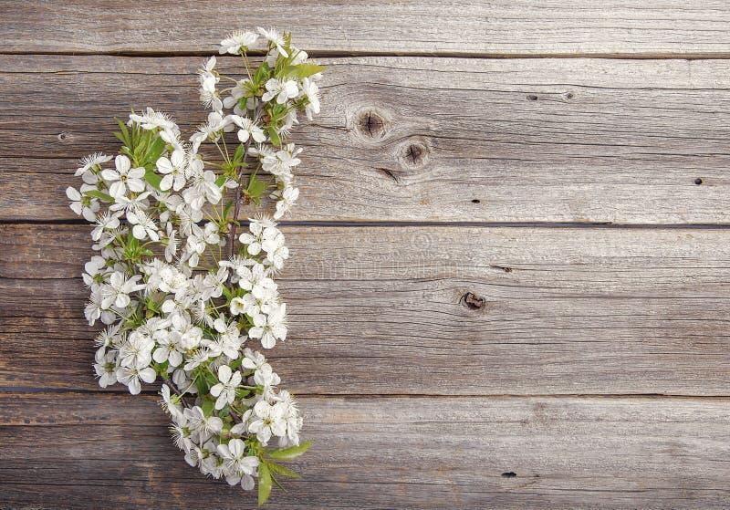 Filialer av ett blomningträd på träbräden arkivfoton