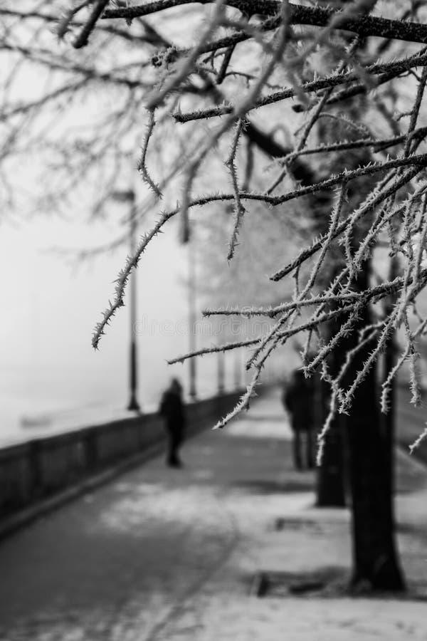 Filialer av ett träd med rimfrost på Danubet River i Budapest royaltyfria bilder