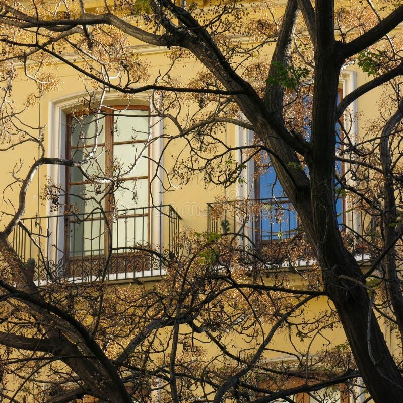 Filialer av ett träd och fönster royaltyfri bild