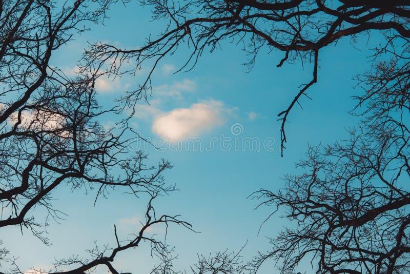 Filialer av ett tr?d utan sidor i tidig v?r mot en ljus bl? himmel och s?des?rlan p? filial arkivfoton