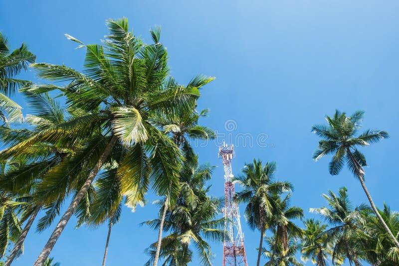 Filialer av kokosnöten gömma i handflatan under blå himmel med kommunikationstornet på bakgrund arkivfoton