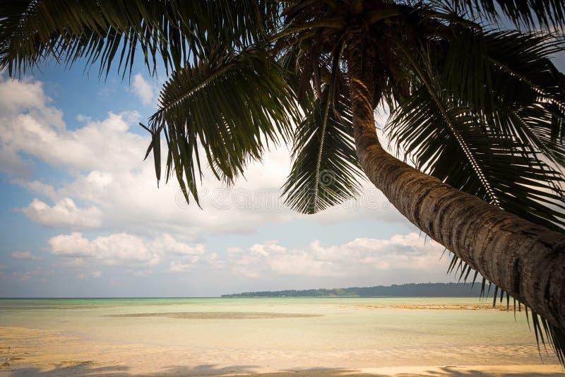 Filialer av kokosn?ten g?mma i handflatan under bl? himmel arkivbilder