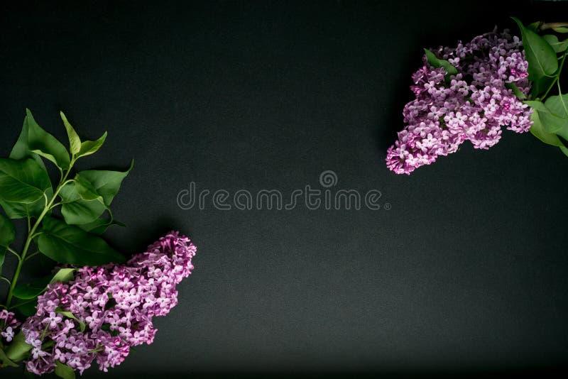 Filialer av lilan på en svart bakgrund royaltyfria bilder