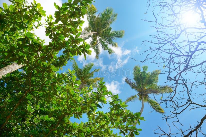 Filialer av palmträdet mot härlig blå himmel royaltyfria foton