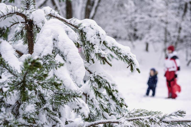 Filialer av skogbarrträdet som täckas med snö, den oigenkännliga unga modern med barnet i snöig, parkerar, övervintrar royaltyfri foto