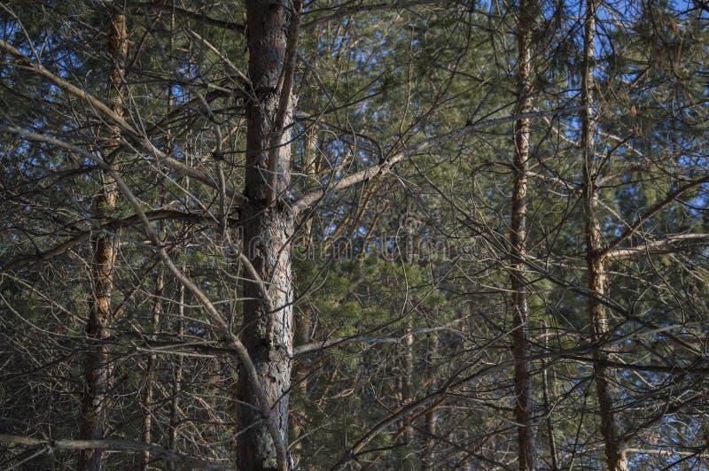 Filialer av träd i en skog arkivbild