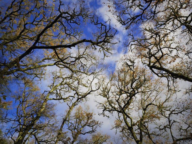 Filialer av träd i himlen arkivbilder