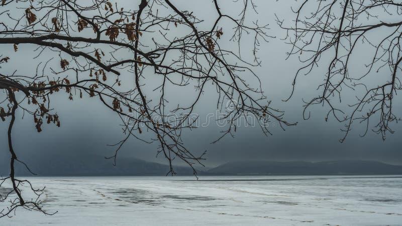 Filialer av tr?d i skogen med moln i vintern mot bakgrunden av berg royaltyfria foton