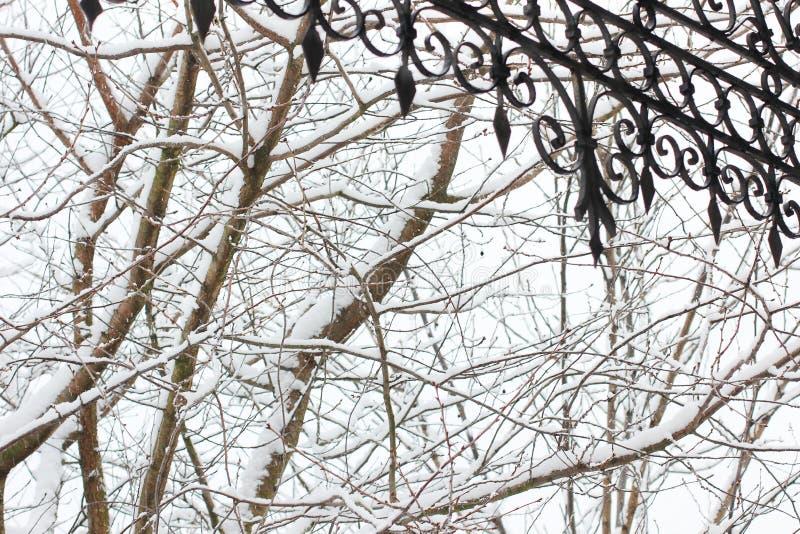 Filialer av träd i snön och i förgrundsdelen av det falska taket royaltyfri bild