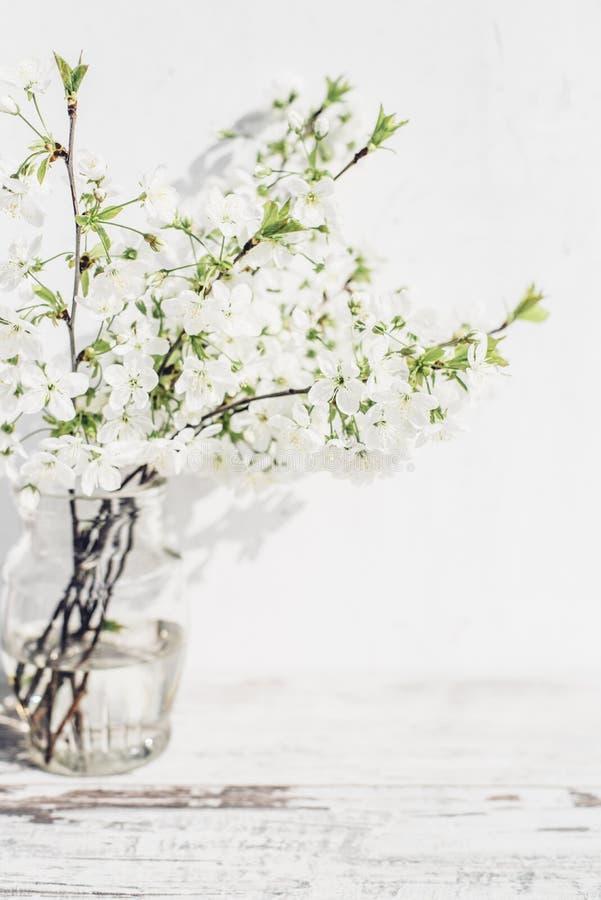 Filialer för körsbärsrött träd med vit blomstrar i vas av tappningtabellen royaltyfria foton