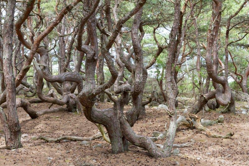 Filialer i en skog royaltyfria foton