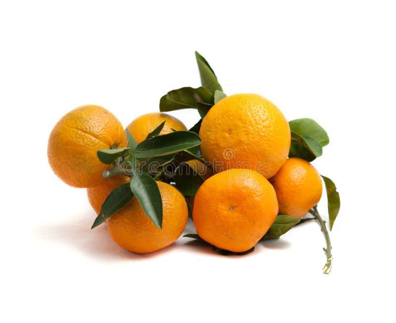 Filialer med frukter av mandariner och sidor citrus white för bakgrund royaltyfri fotografi