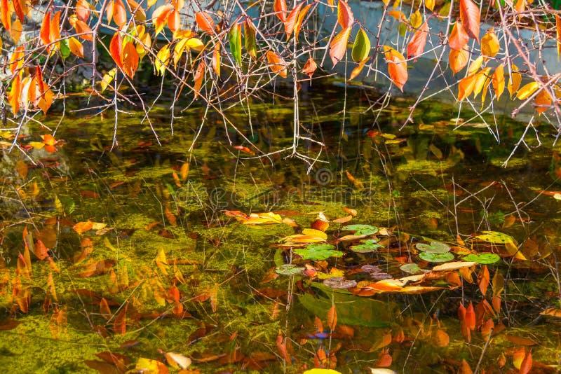 Filialer med torra sidor över dammet arkivbild