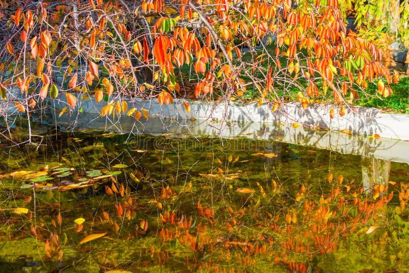 Filialer med torra sidor över dammet royaltyfri fotografi