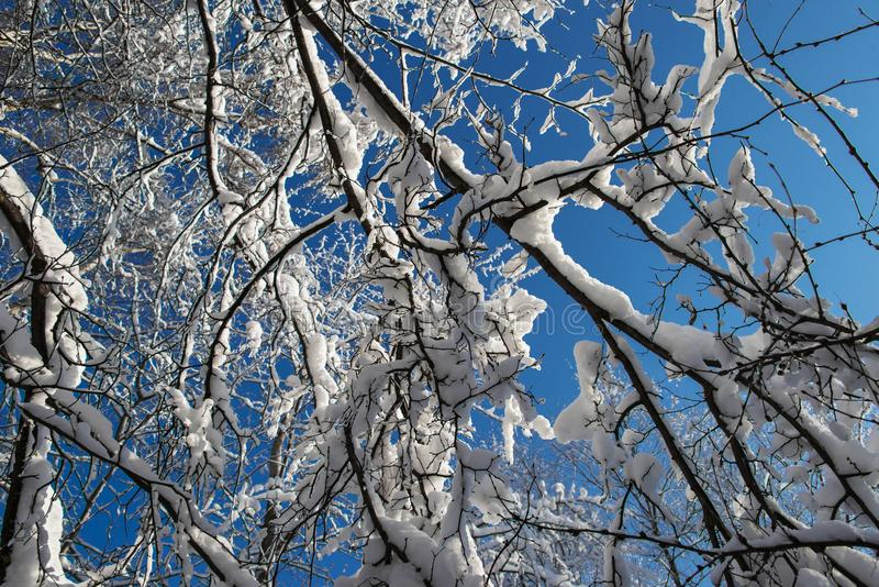 filialer räknade snowtreen arkivfoto