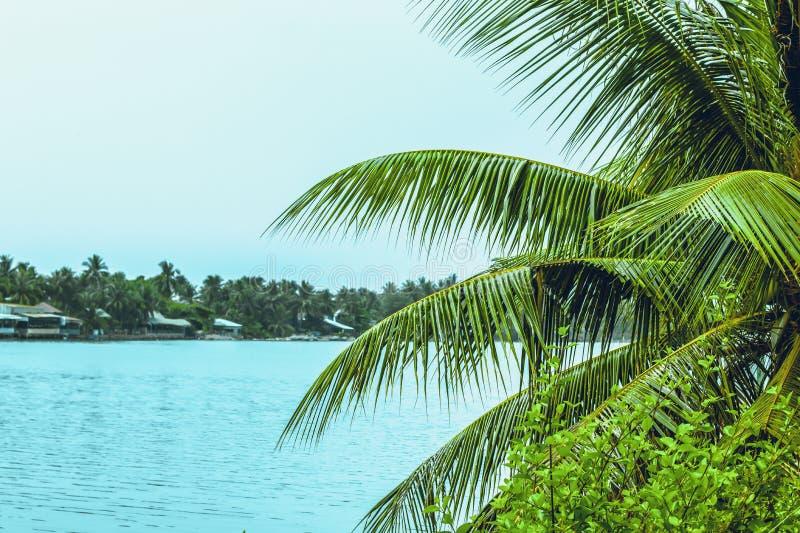 Filialerna av palmträdet och havet royaltyfria foton