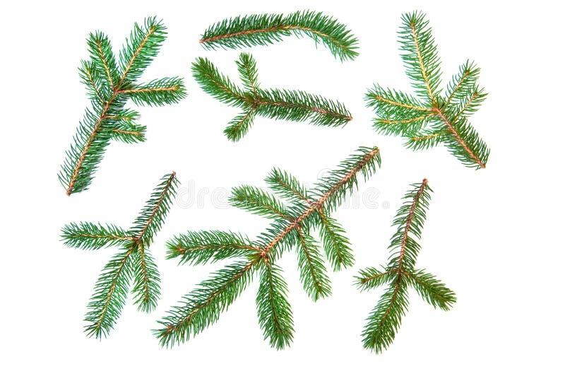 filialgran sörjer den set treen arkivfoton