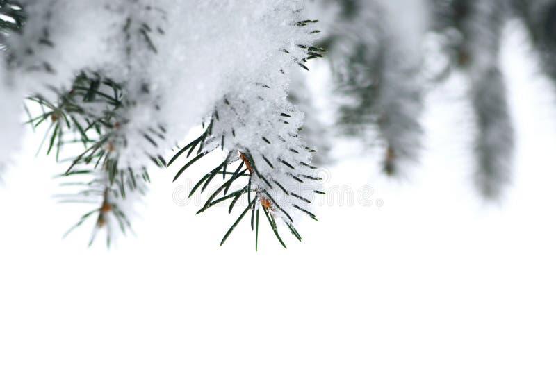 Filiali attillate con neve immagini stock libere da diritti