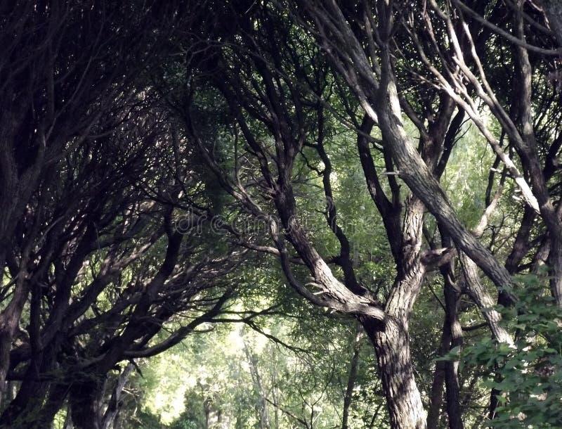 Filiali degli alberi immagine stock libera da diritti