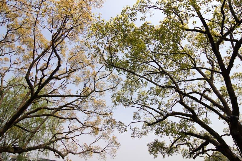 Filiali degli alberi fotografia stock